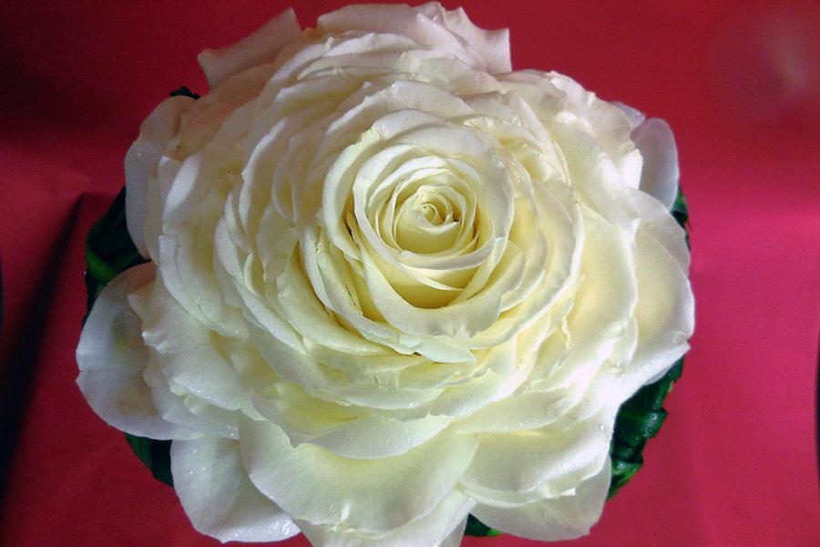 bouquet duchesse2